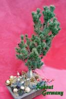 Kohouts_Weihnachtsbonsai1