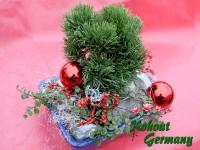 Kohouts_Weihnachtsbonsai2